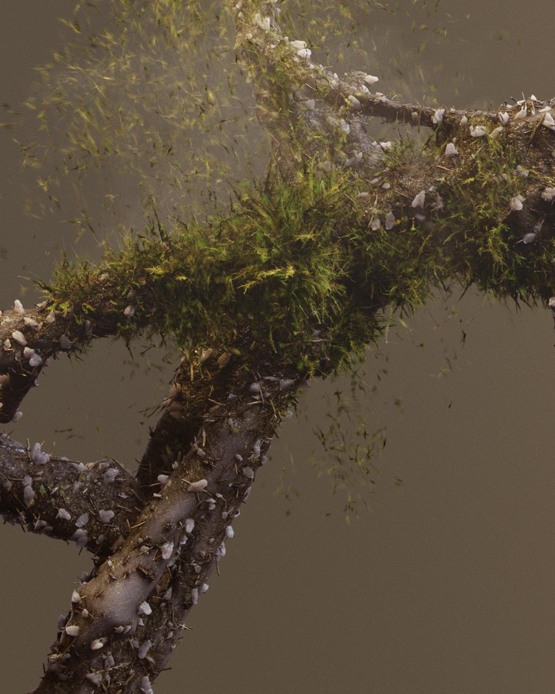 moss-crop