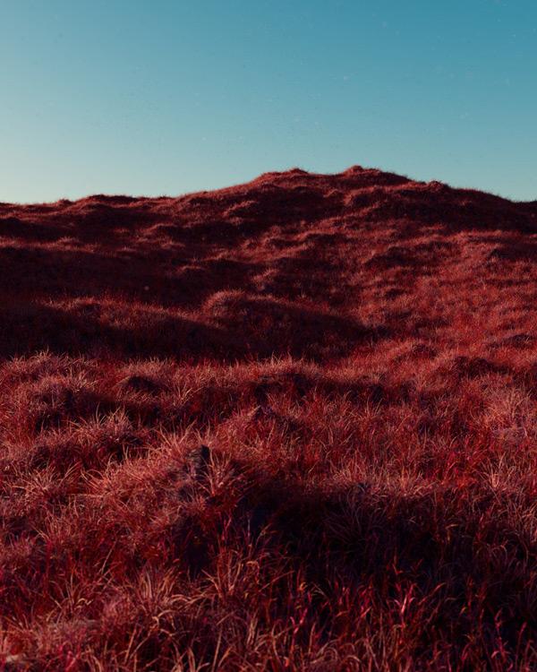 forest_hilll_env_testrender_v001_compressed